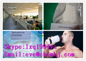China Pharmaceutical Grade Muscle Building Testosterone Enanthate CAS 315-37-7 supplier