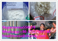 CAS 10161-33-8 Health Oral Anabolic Steroids Muscle Gain Trenbolone Enanthate